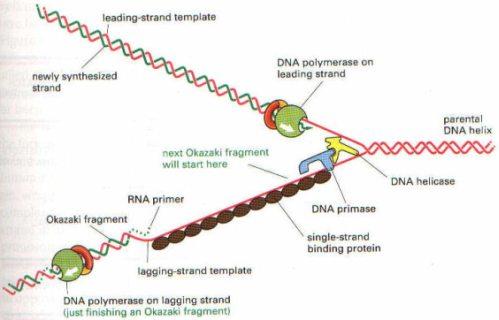 DNASENT6
