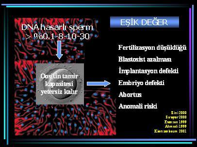 DNA_hasar16