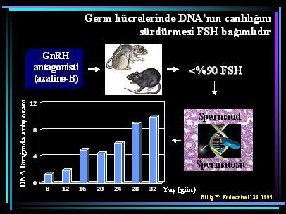 DNA_hasar23