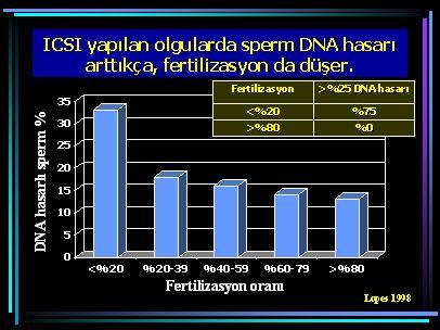 DNA_hasar6