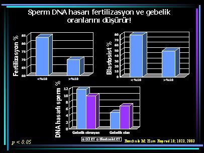 DNA_hasar7
