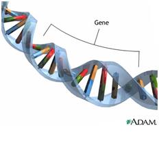 epigenetik11