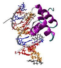 epigenetik2