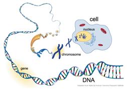 epigenetik6