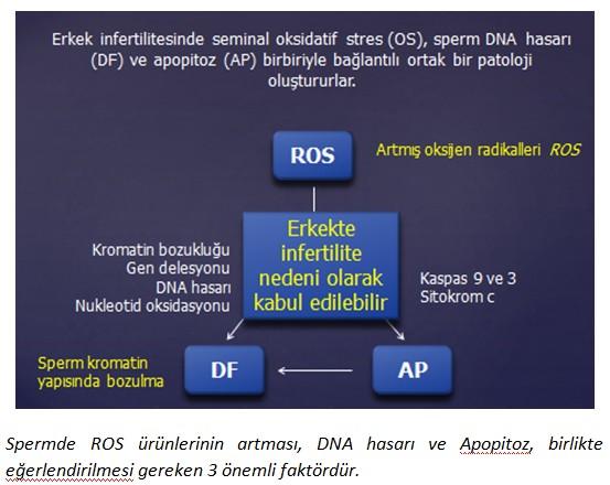 oksidatif_stres2.jpg