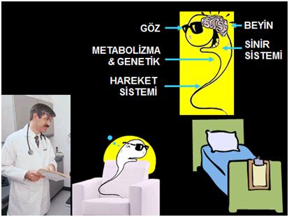 metobolizma