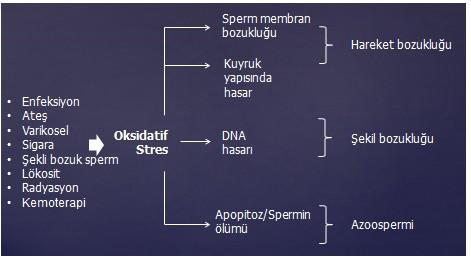 oksidatif2.jpg